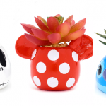 Disney Succulent Potted Plants