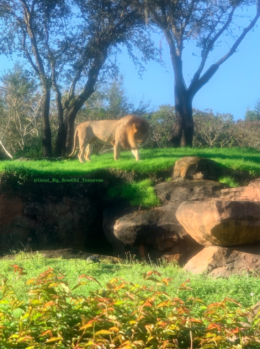 Disney's Animal Kingdom Bucket List