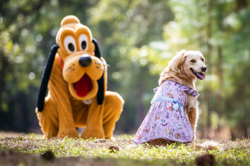 Disney Pets Collection